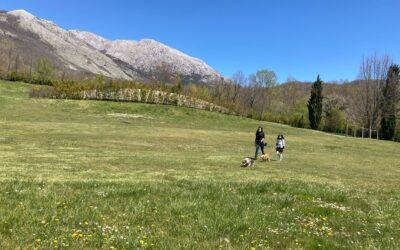 Trekking con il cane: le regole da seguire