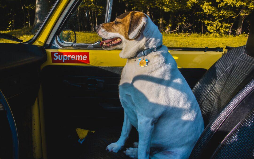 Cinema Drive-In per Umani e Animali