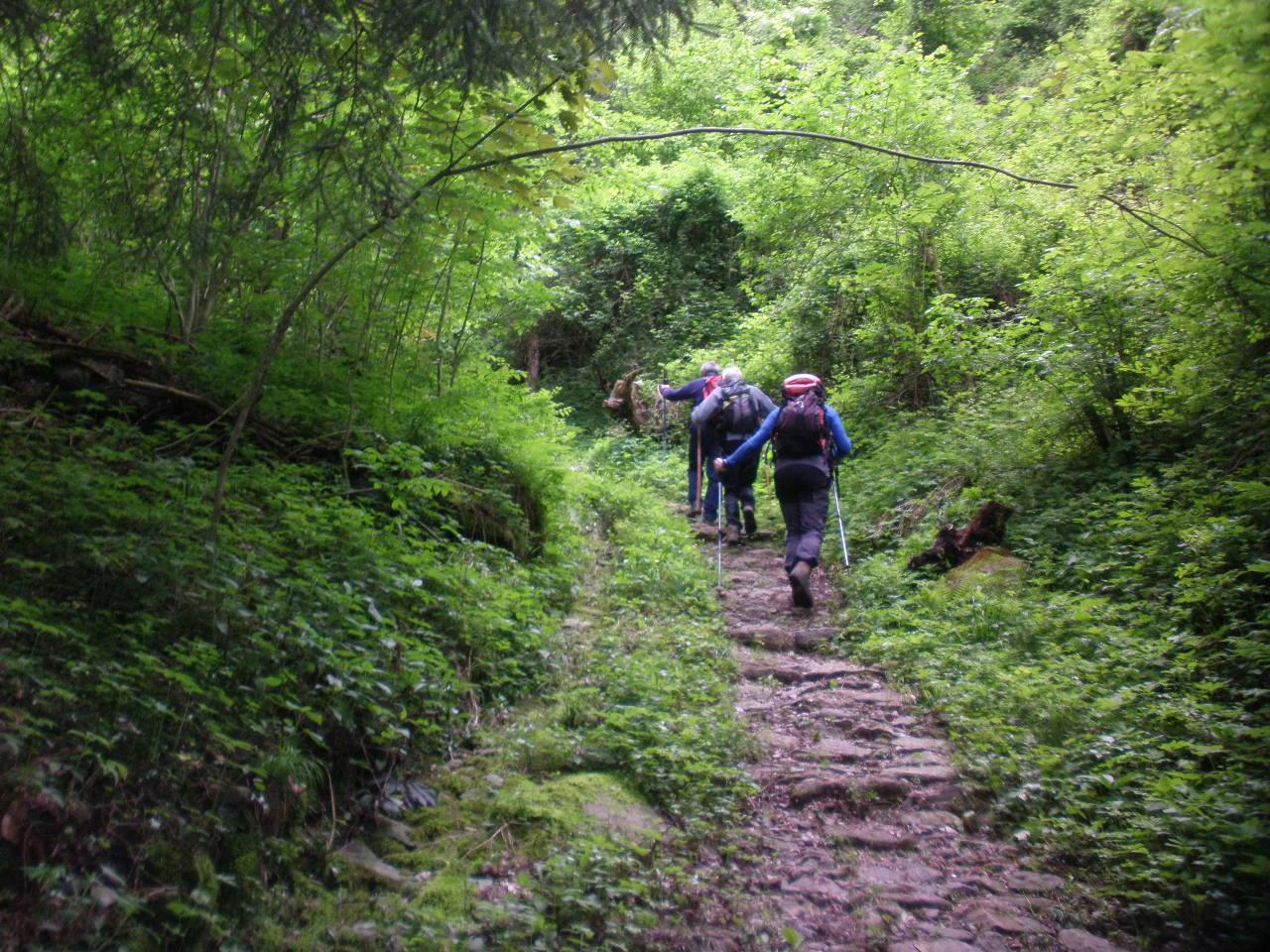 Lungo il sentiero 119 - Foto: altobrembo.it