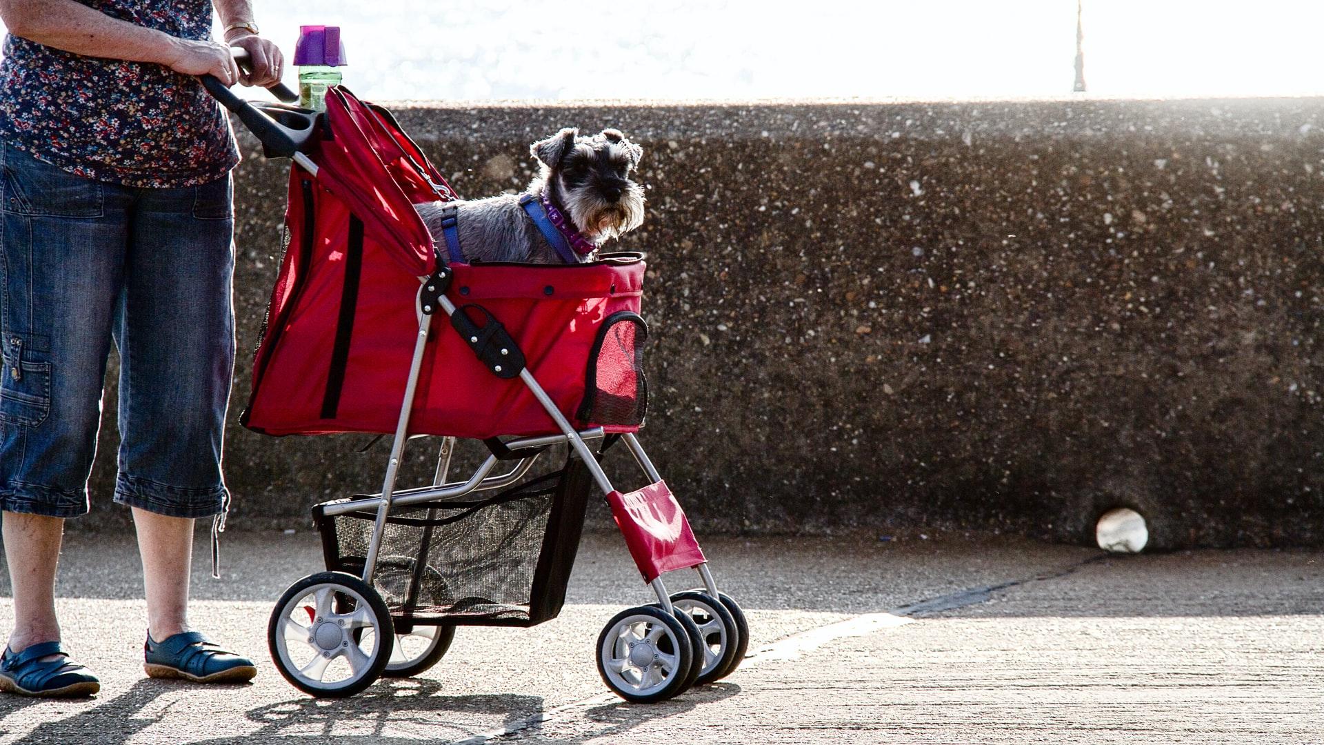 Passeggino per Cani - Foto: Unsplash.com