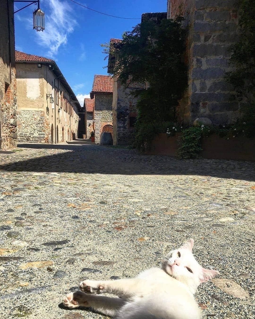 Un bel gattone si gode il sole fra le vie di Candelo
