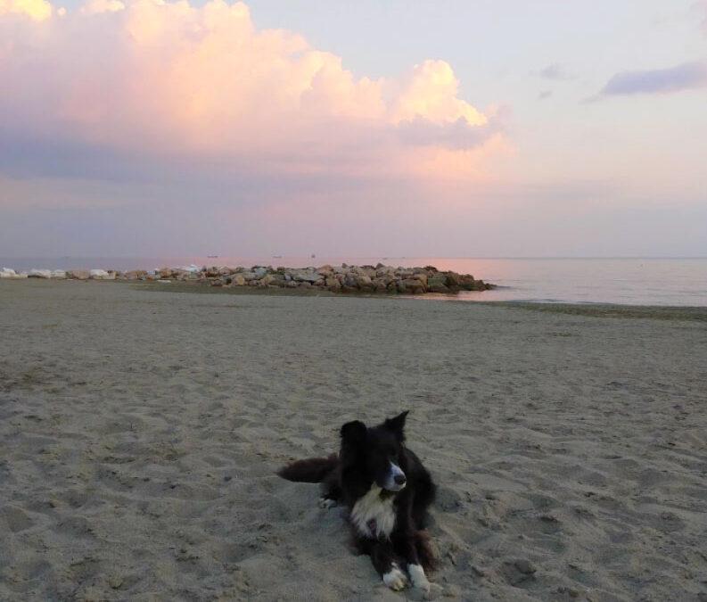 Fiumaretta, la spiaggia per cani di Ameglia