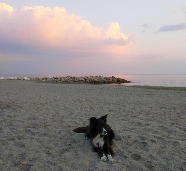 Fiumaretta, spiaggia per cani. Foto: Giulia Reali
