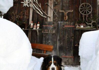 Diuk, la mascotte a 4 zampe di Sottoguda - Foto: Monika De Biasio