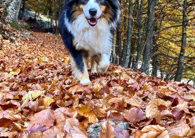 Faggeta in autunno - Foto: Monika De Biasio