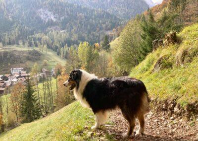 La Via della Meditazione - Passeggiata pet friendly a Sottoguda - Foto: Monika De Biasio