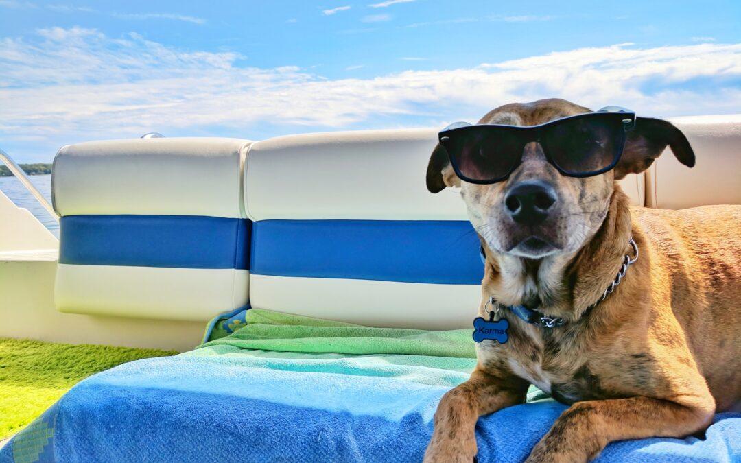 6 consigli prima di partire per le vacanze con i pet