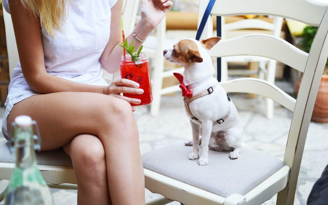 Dog bar in ogni borgo pet