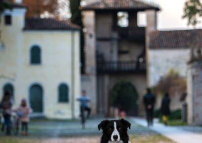 Itinerari pet friendly a Cordovado