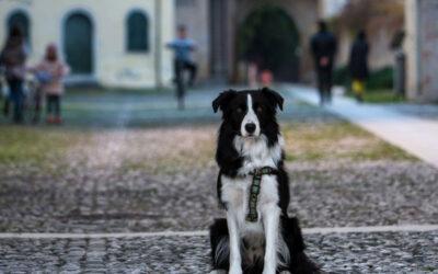 3 itinerari pet friendly a Cordovado