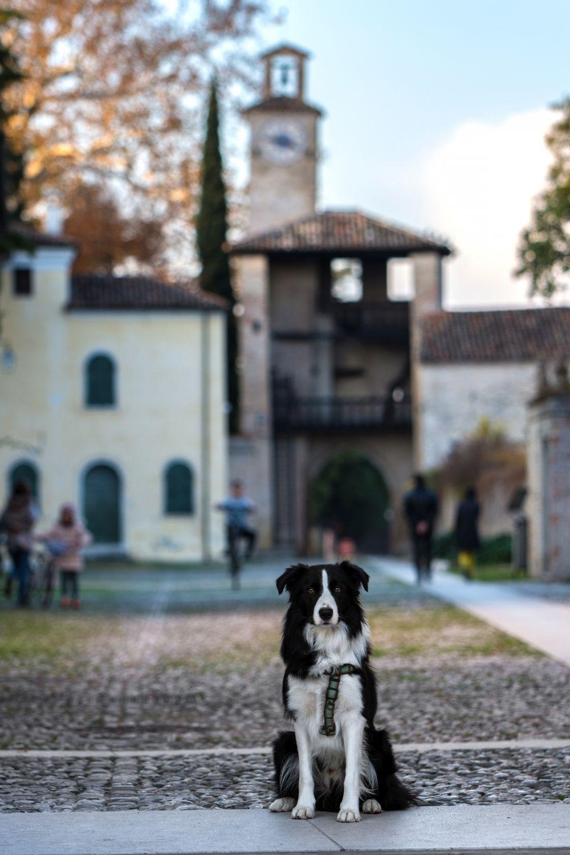 Un amico pelosetto nei pressi del Castello di Cordovado