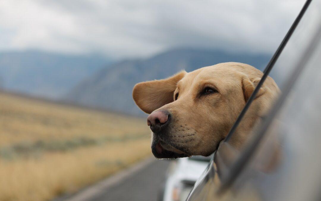 Come rinfrescare il cane in viaggio e in vacanza