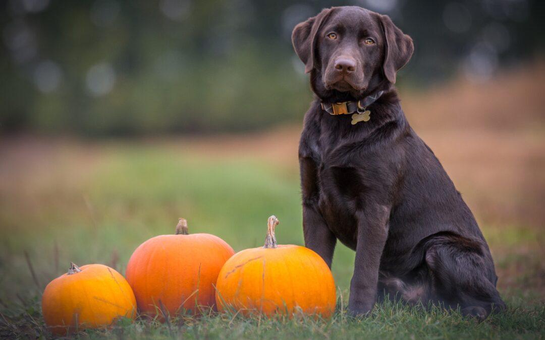 6 consigli per godersi l'autunno con gli amici a 4 zampe