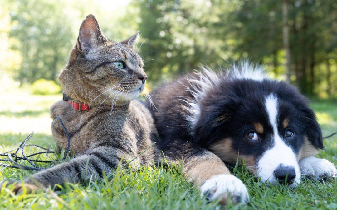 Cane vs Gatto: come gestire la loro convivenza