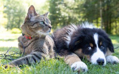 Cane vs Gatto: impariamo a gestire la loro convivenza