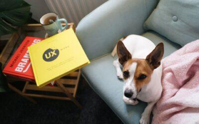Tisane per Cani – Aiutiamo Fido a contrastare i primi freddi